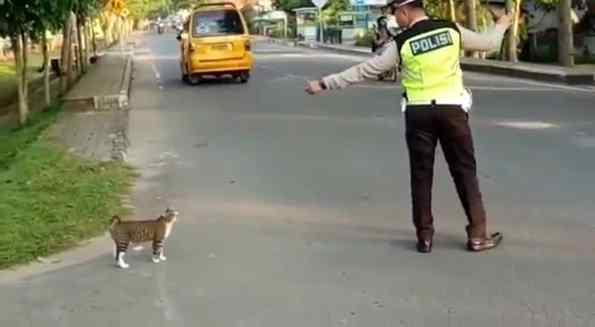 Policial ajuda gato a atravessar a rua