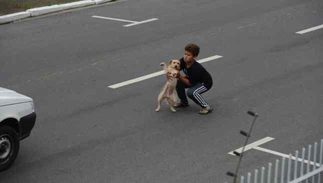 garoto alvou cachorro atropelado itajaí