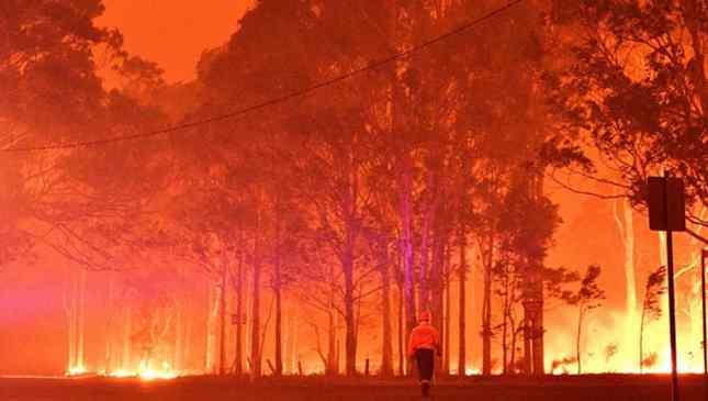 incêndios matam animais na austrália