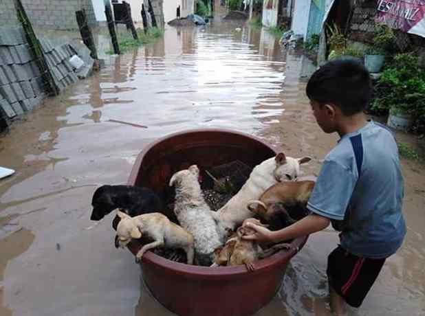 menino salva animais em inundação