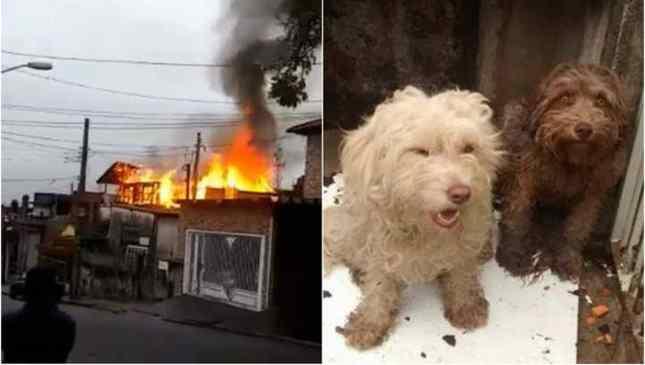 mulher morre salvando cachorros