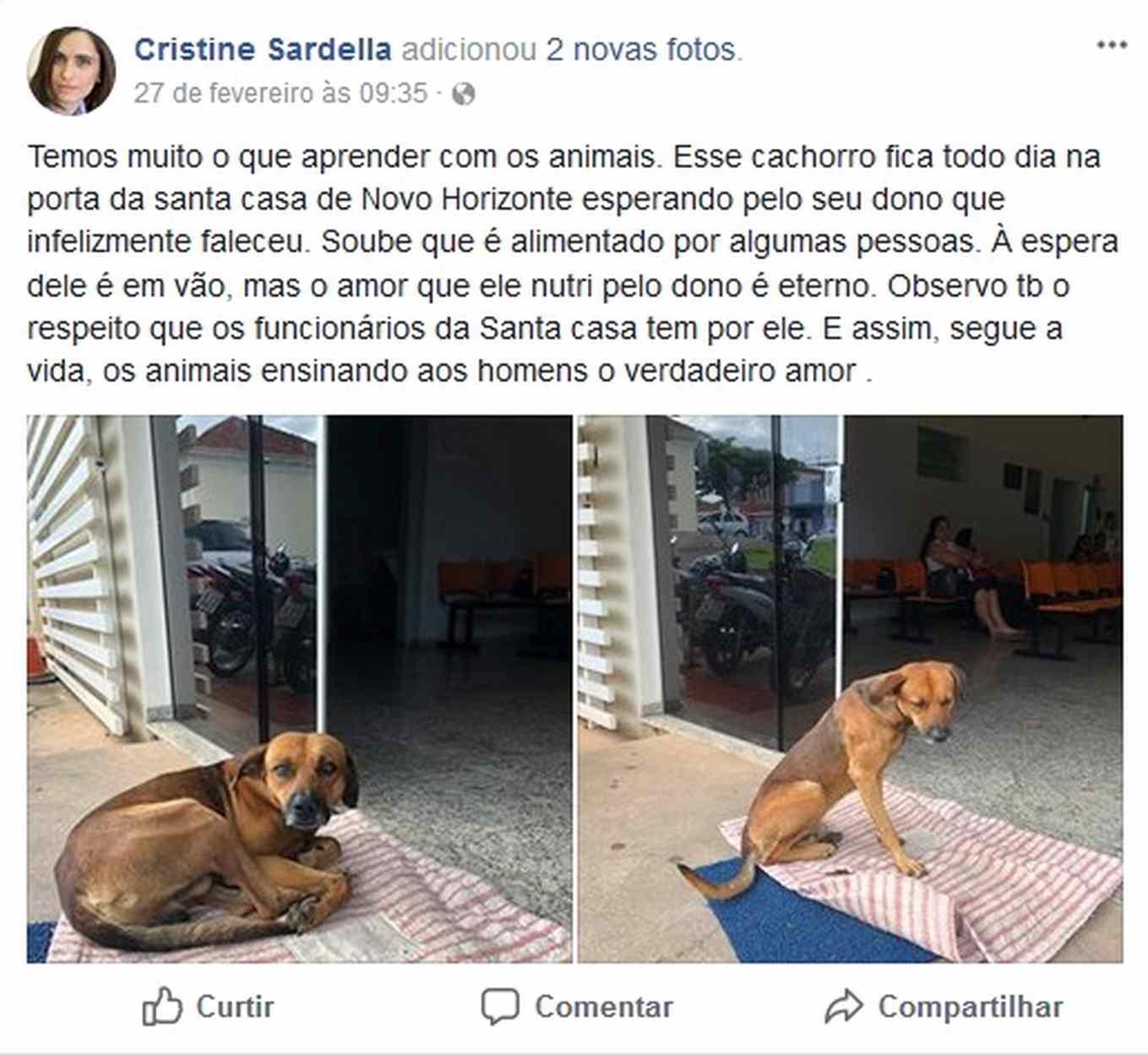 cão aguarda dono do lado de fora do hospital