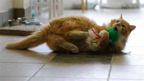 gato Toby  foi adotado