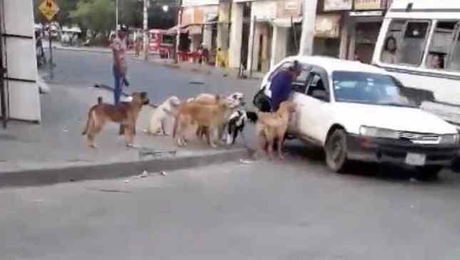 taxista aceita levar cães de rua