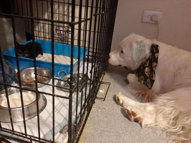 cão consola animais