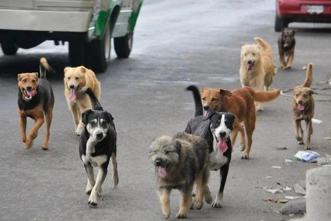 Homem acorda de madrugada para alimentar cães de rua