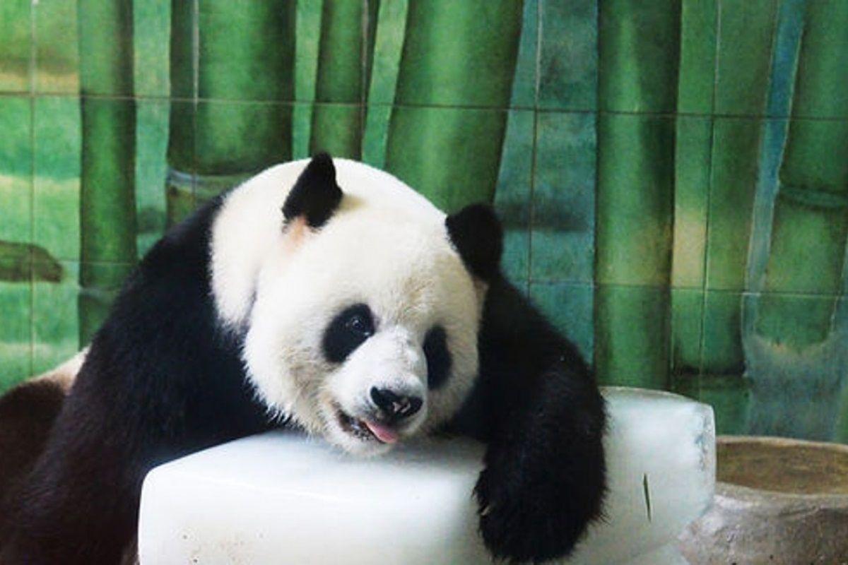 padas no zoológico