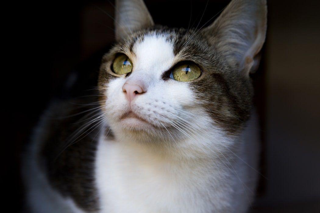 Como os gatos enxergam os humanos?