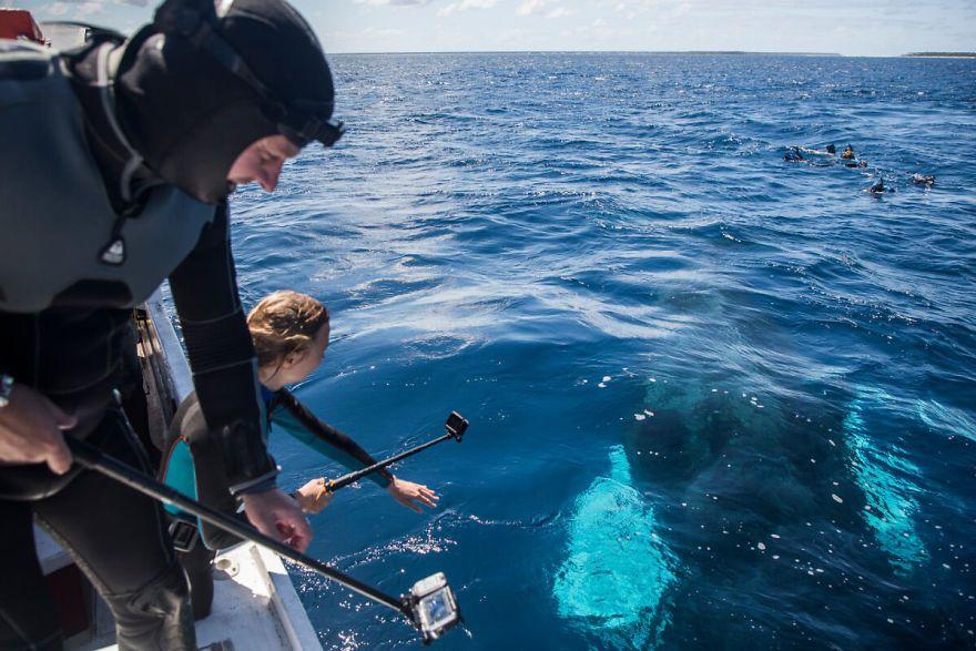 vídeo mergulho com baleias