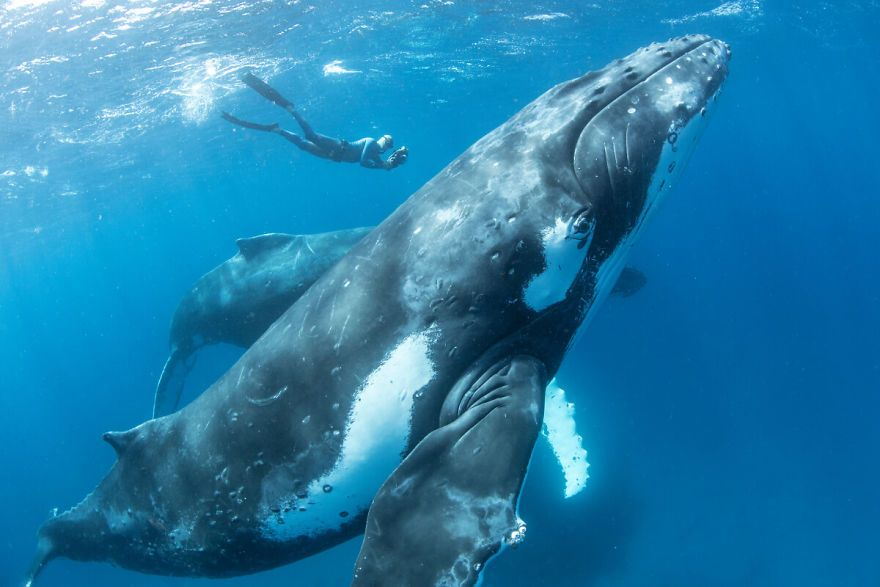 homem nada com baleia