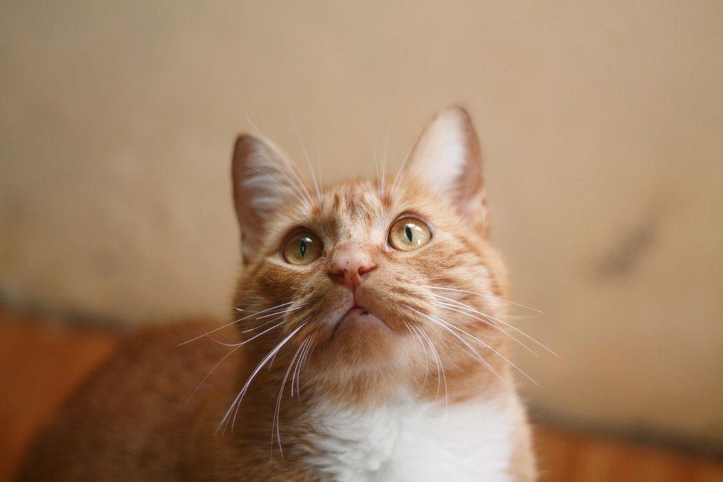 Gatos acham que somos gatos