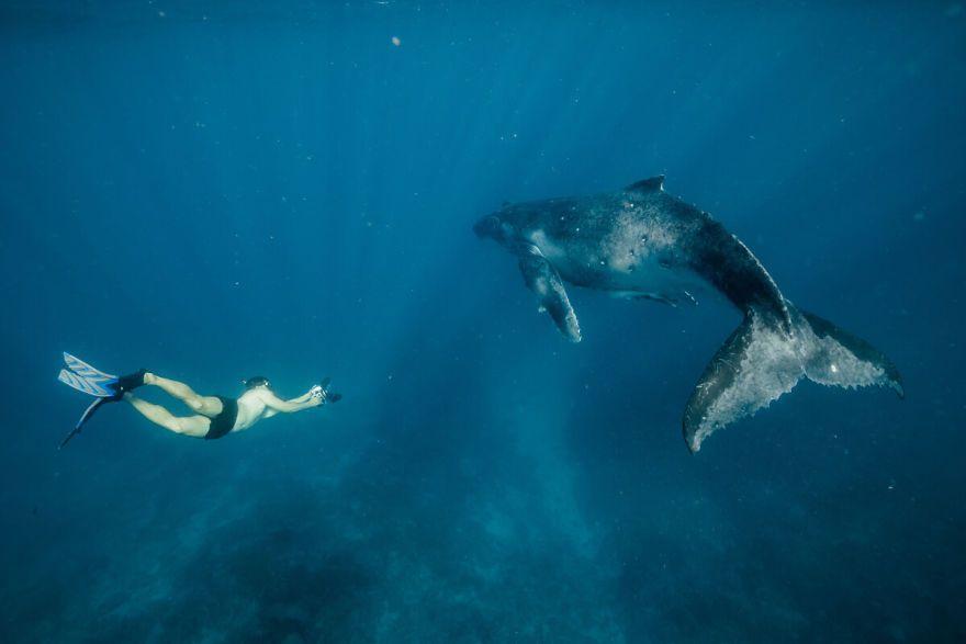 baleia e homem