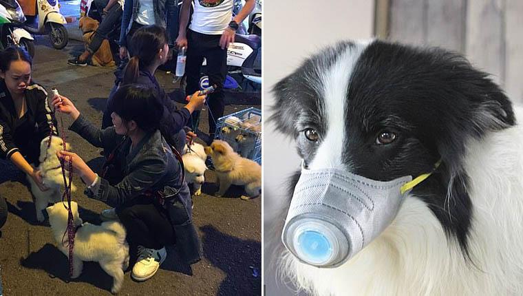 China pede que donos matem seus cães e gatos