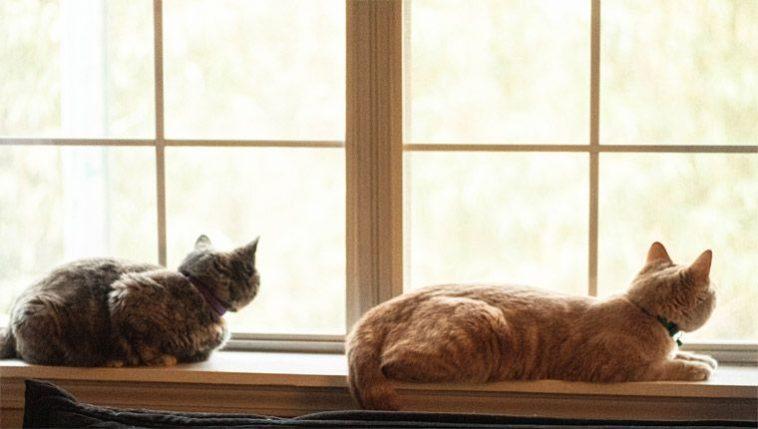 Curiosidades sobre gatos dicas para ajudar o bichano a se adaptar ao novo lar