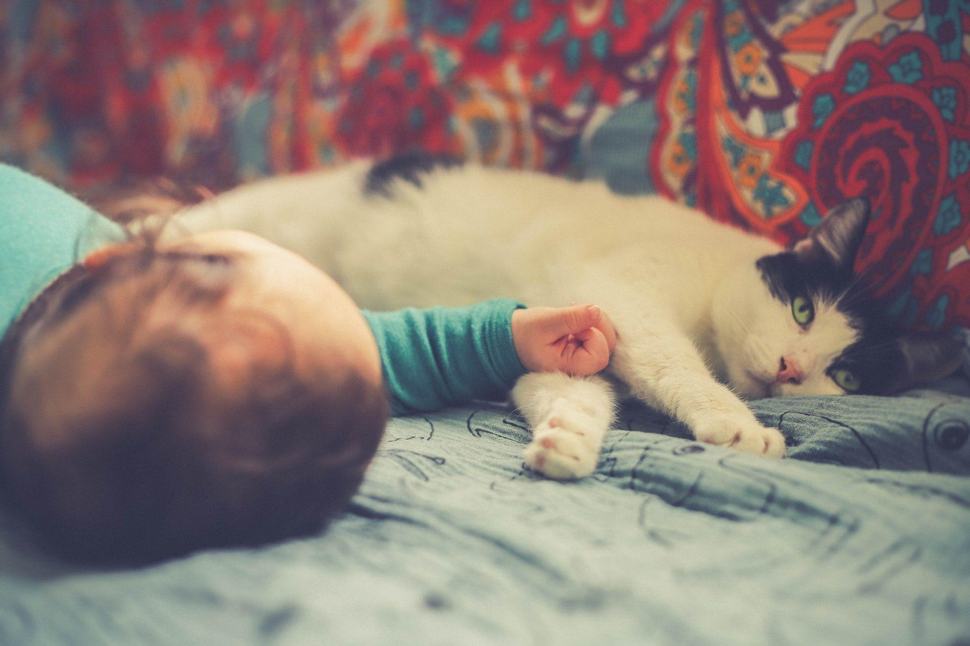 Gatos ajudam a combater alergias