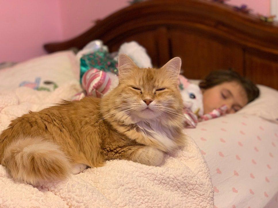 Curiosidades sobre gatos Gatos ajudam a dormir melhor