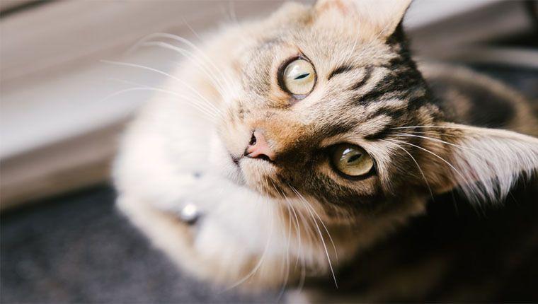 Gatos pensam que somos gatos gigantes