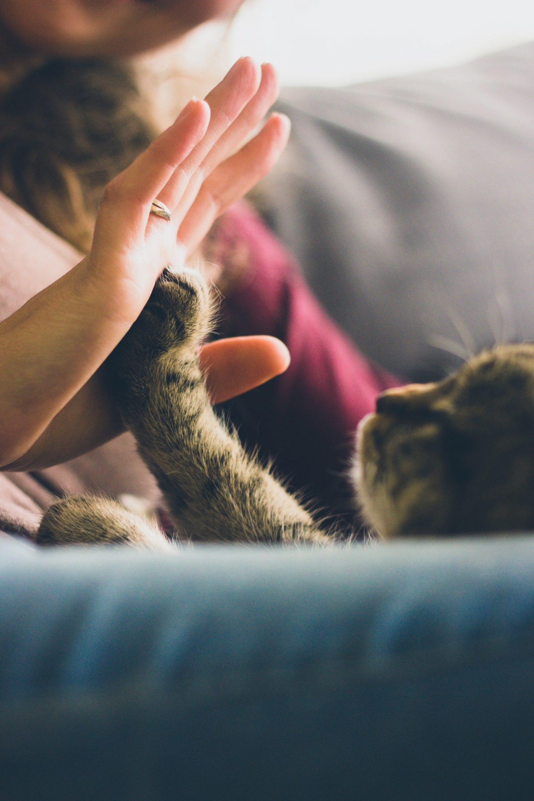 Gatos são carinhosos