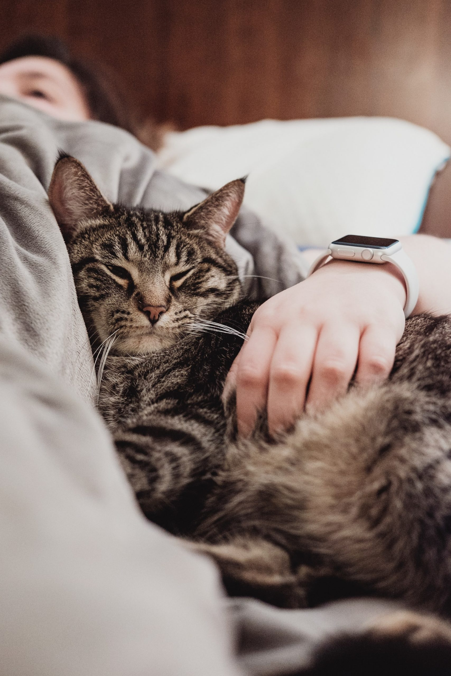 Gatos trazem benefícios aos donos