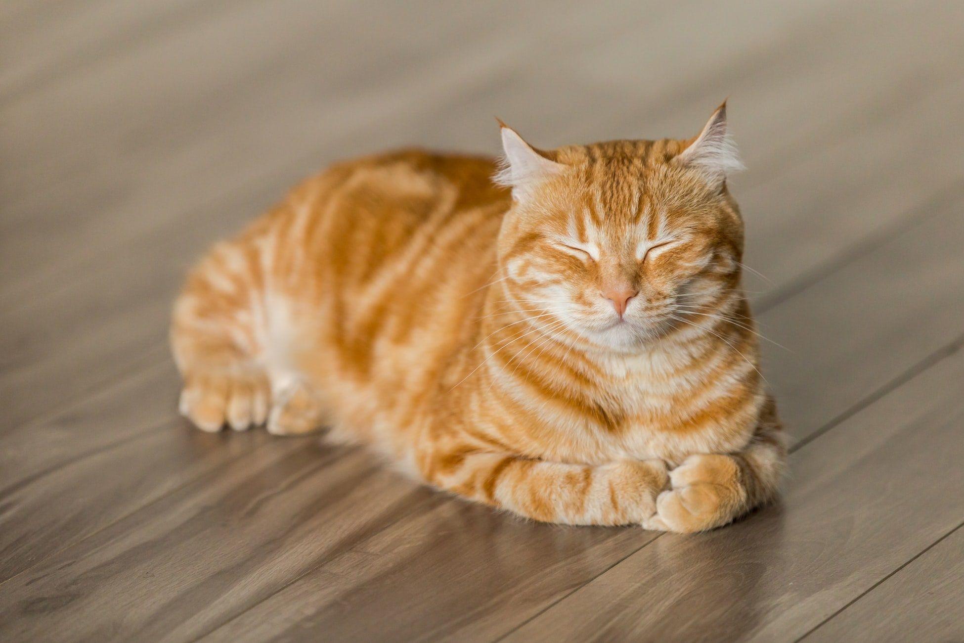 Vantagens de se ter um gato curiosidades sobre gatos