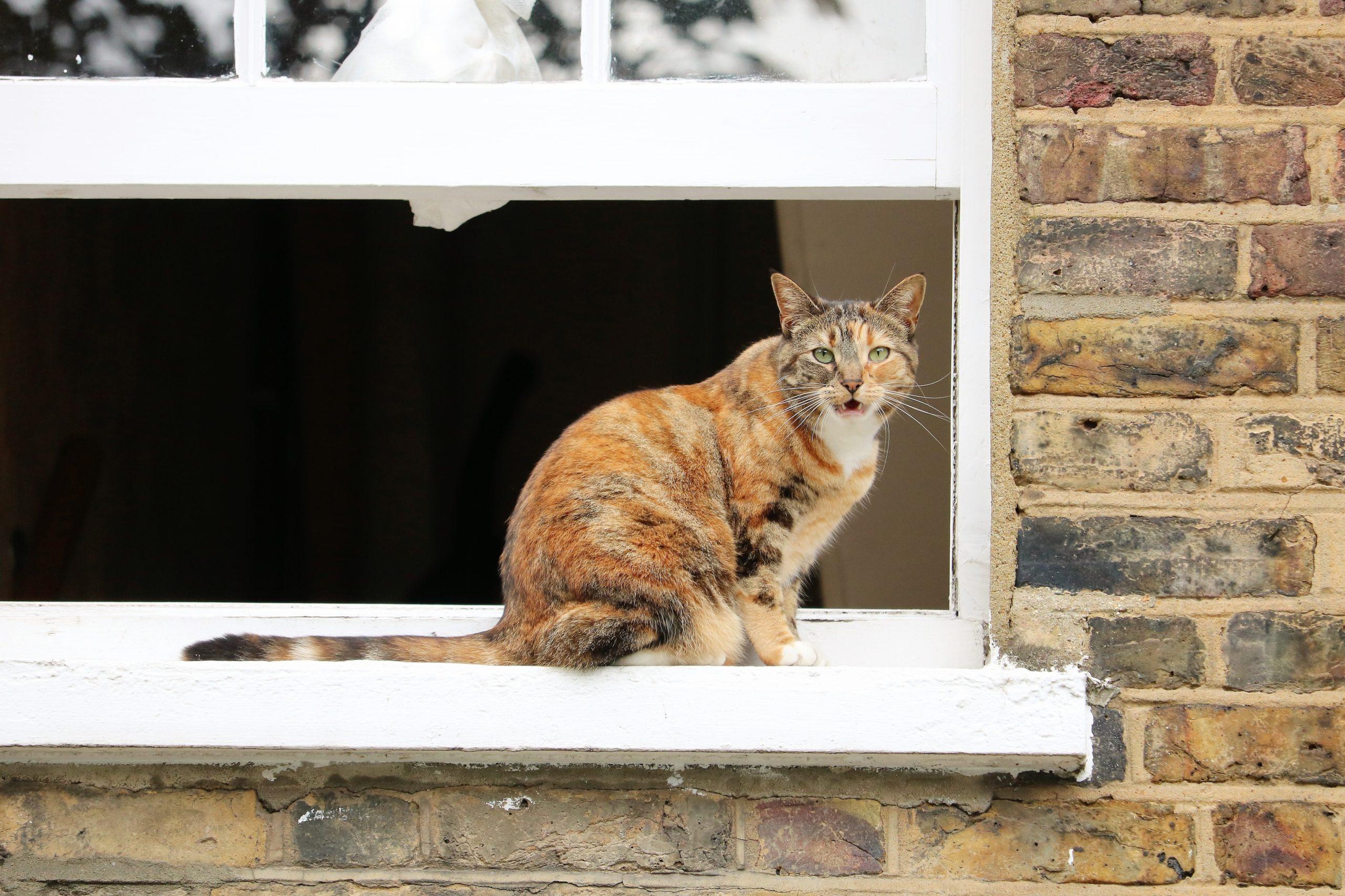 curiosidades sobre gato