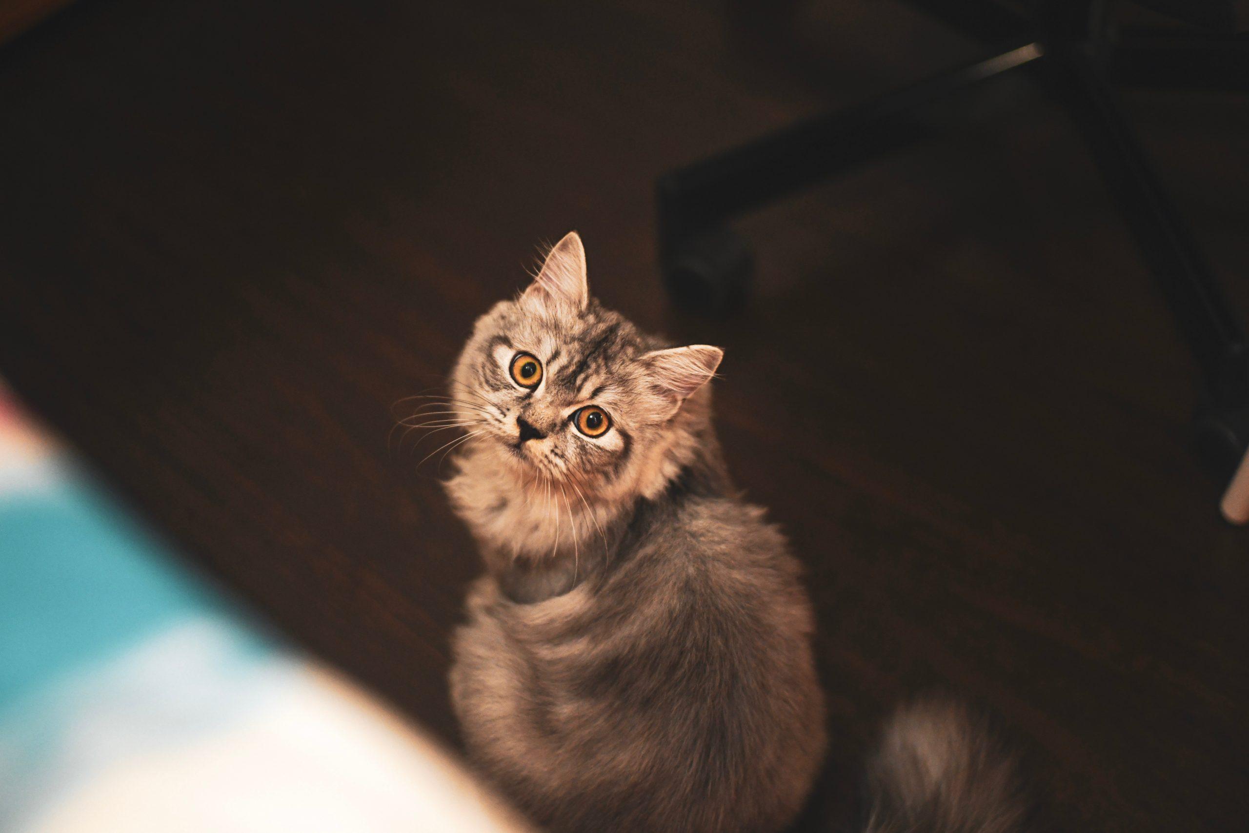 gatos não podem comer comidas de humanos