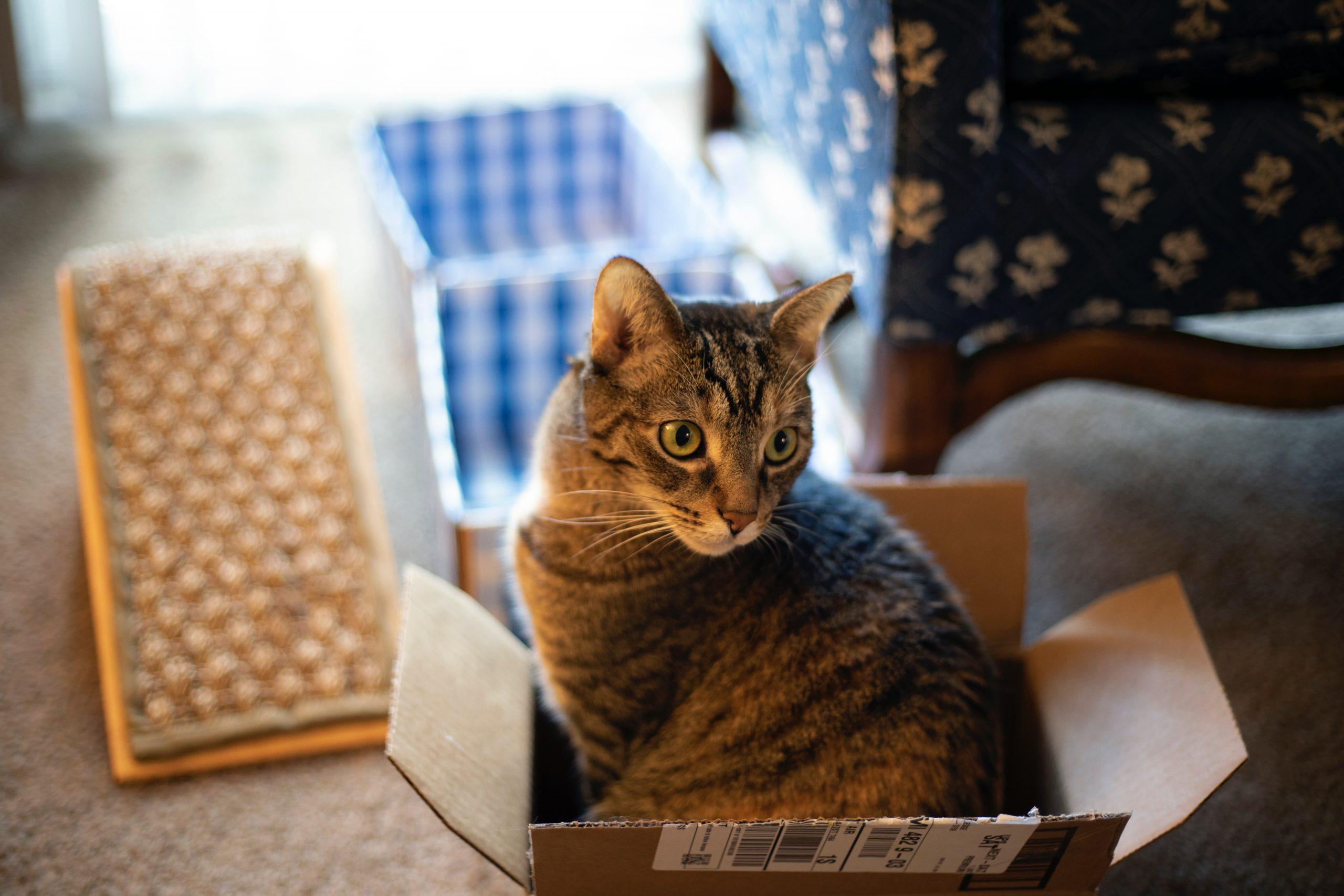 gatos adoram caixas