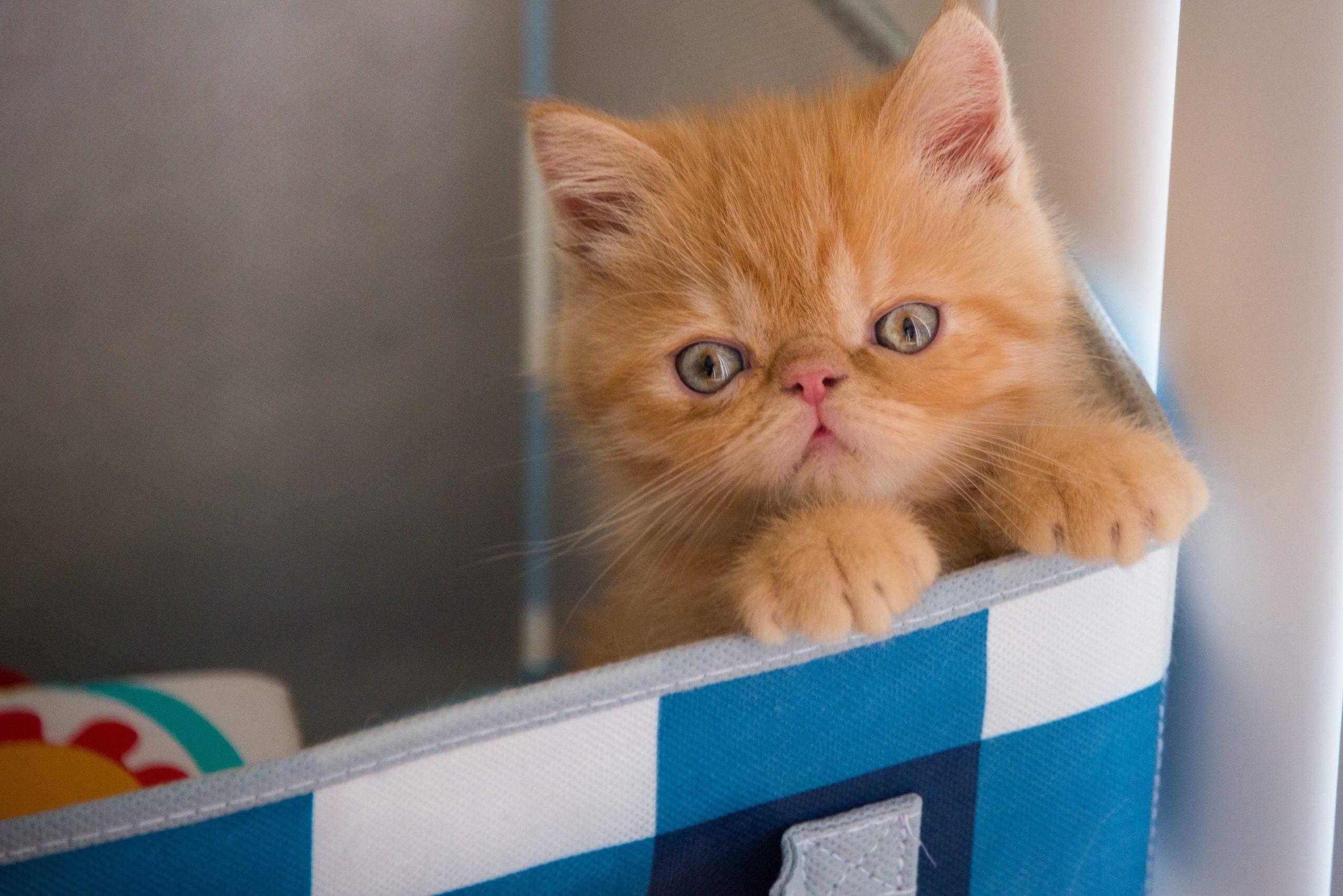 Curiosidades sobre gatos Gatos precisam tomar banho?