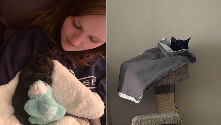 gato e seu cobertor