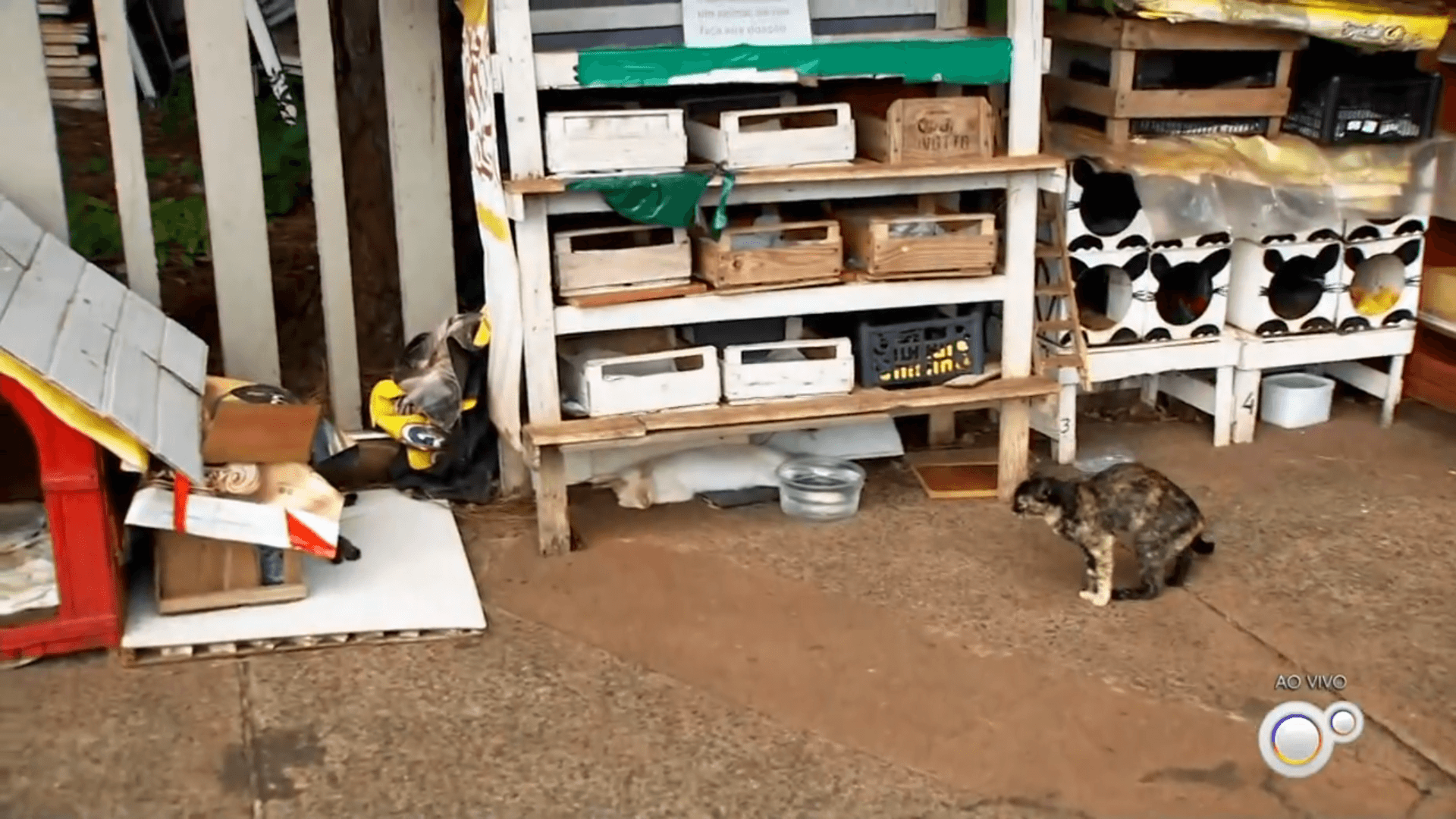 gatos abandonados em represa