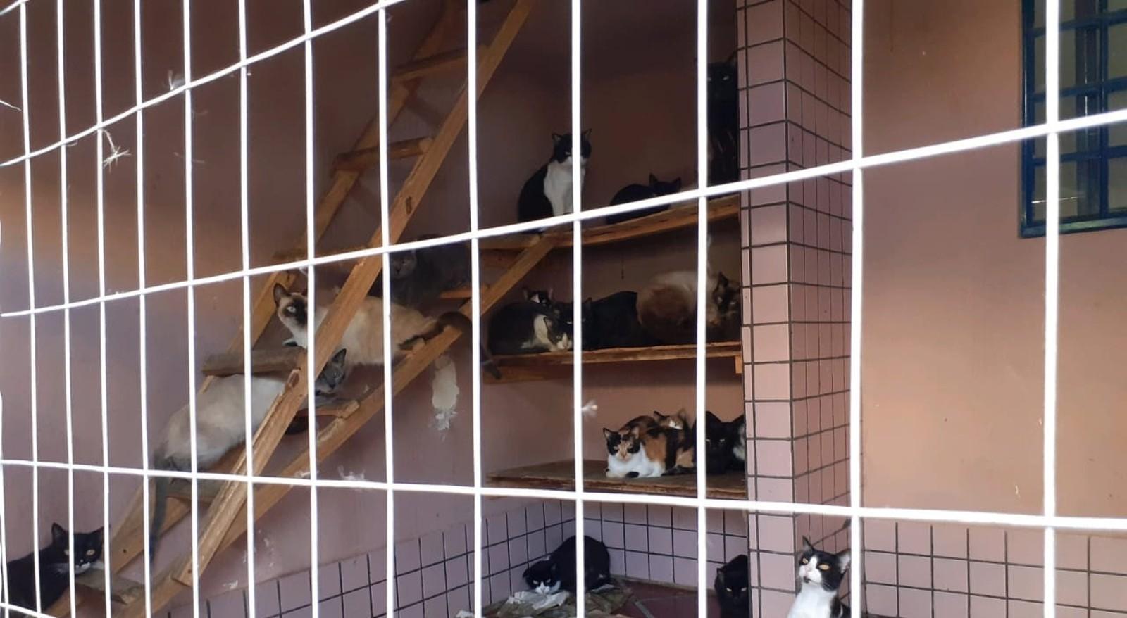 gatos em situação de maus-tratos