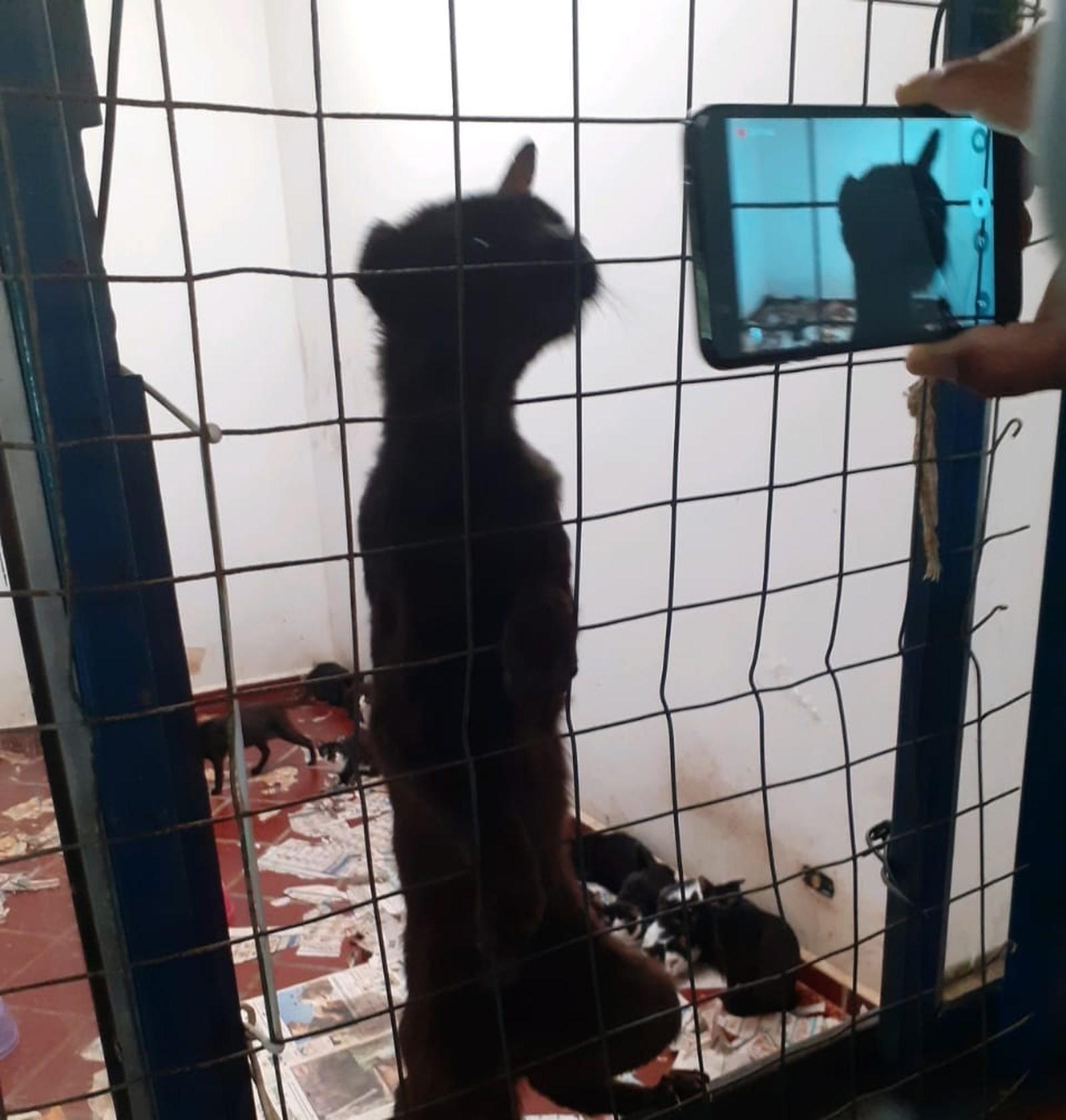 gatos resgatados em Ponta Grossa