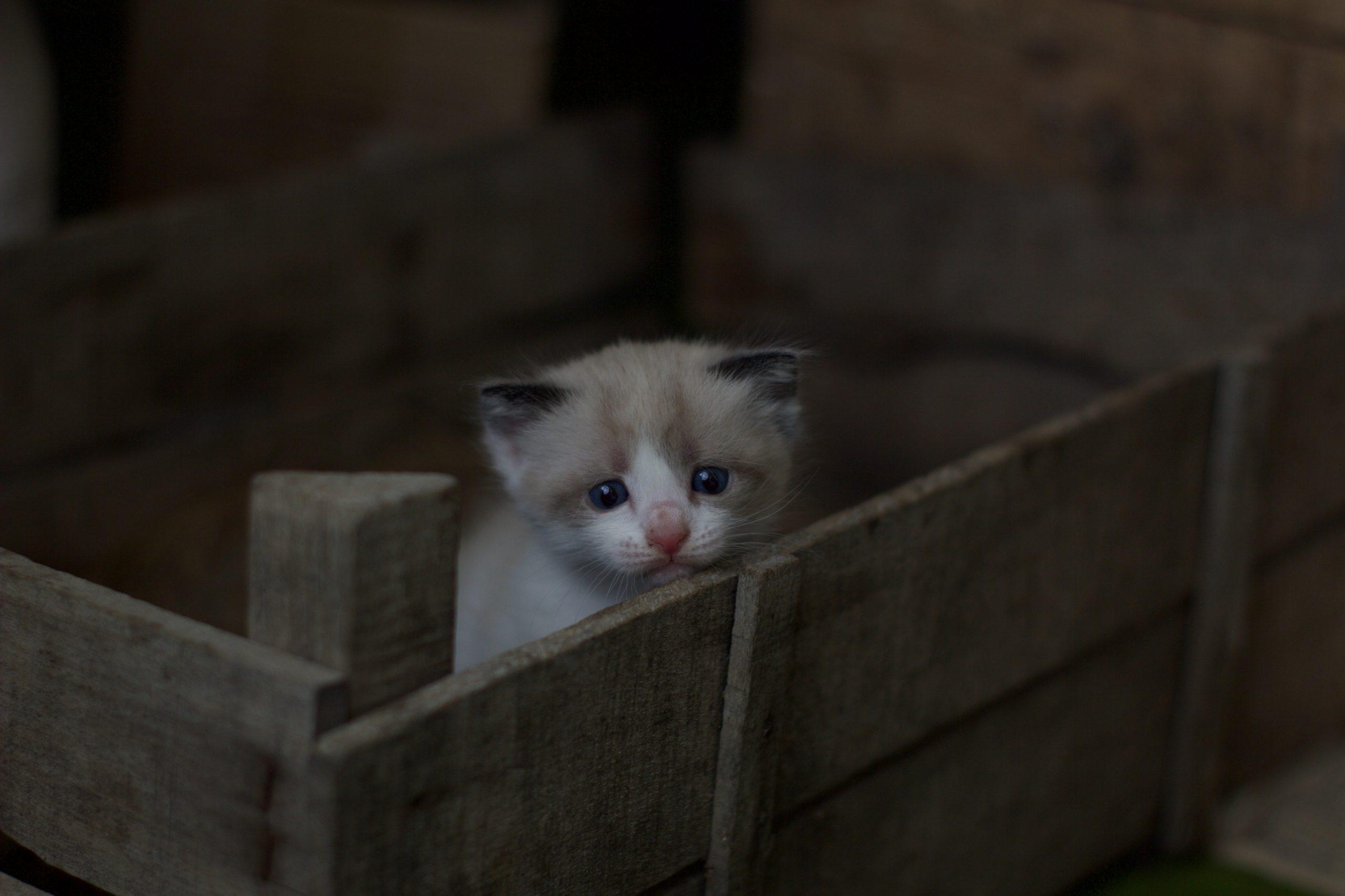 Como proteger os gatos do barulho dos fogos?