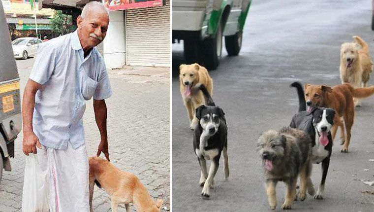 idoso acorda de madrugada para alimentar cães de rua