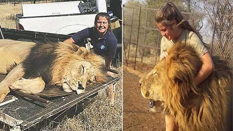 Jovem foi morta por leões