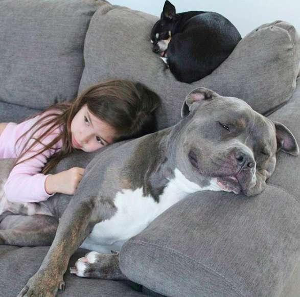 menina e pitbull melhores amigos