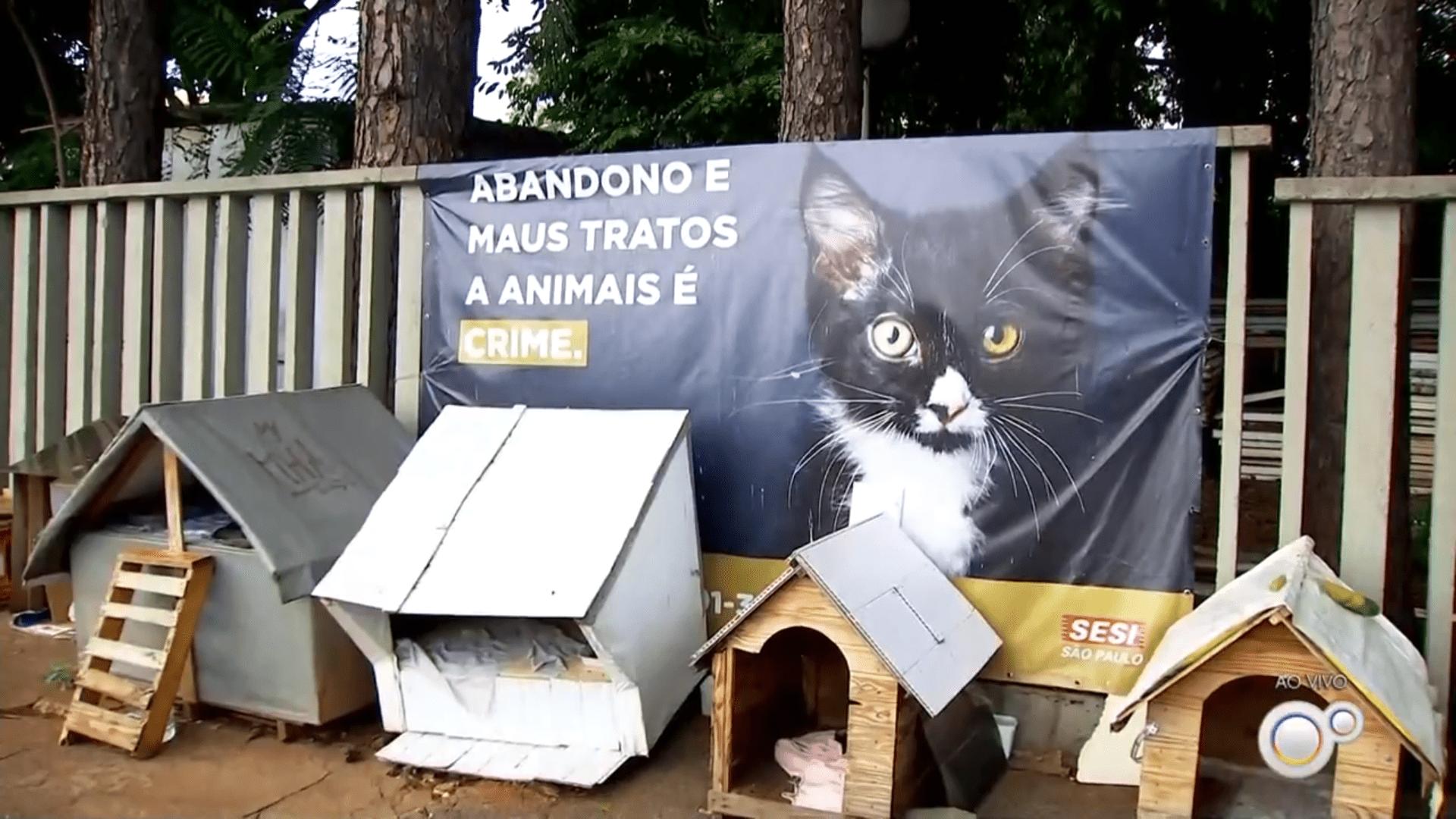 Abandono de gatos e cães