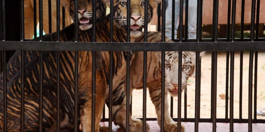 animais no zoológico de Wuhan