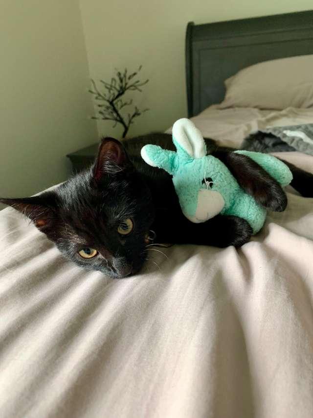 gato e ursinho de pelúcia