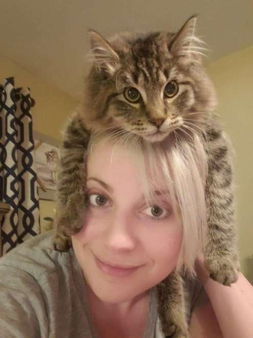 gato acha que é um chapéu