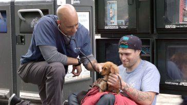 Veterinário cuida de graça de animais de moradores de rua no estado todo