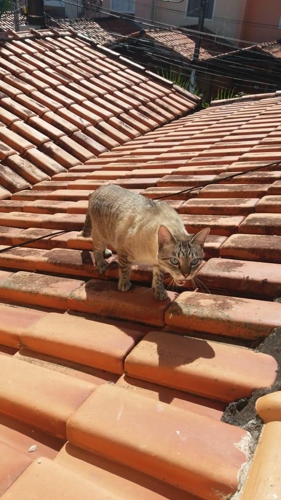 Gato no telhado