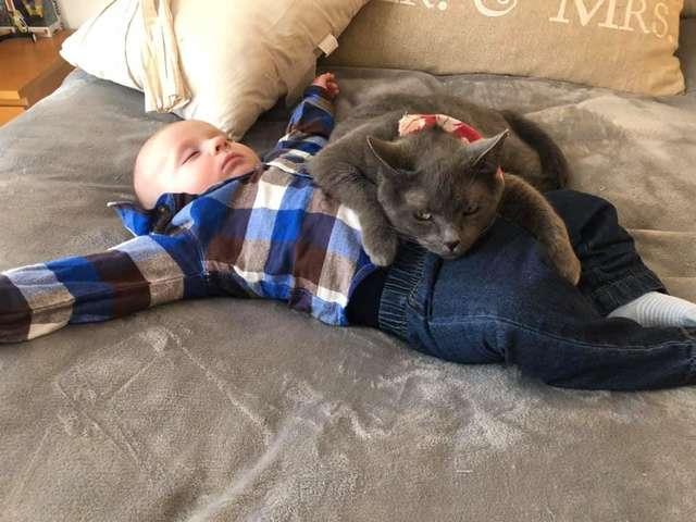 gata apaixonada por bebê