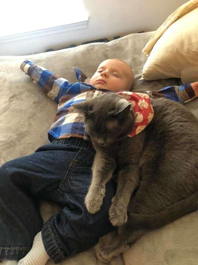 gata se apaixona por bebê