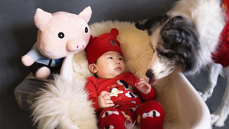 Bebês que convivem com cães são mais saudáveis diz estudo