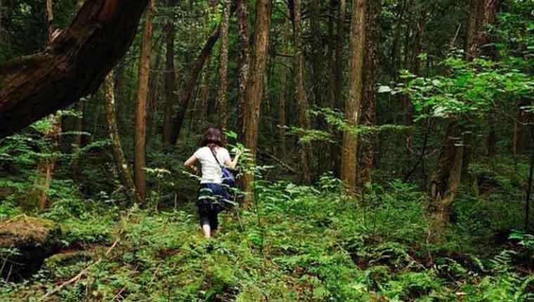 Floresta dos suicídios no Japão