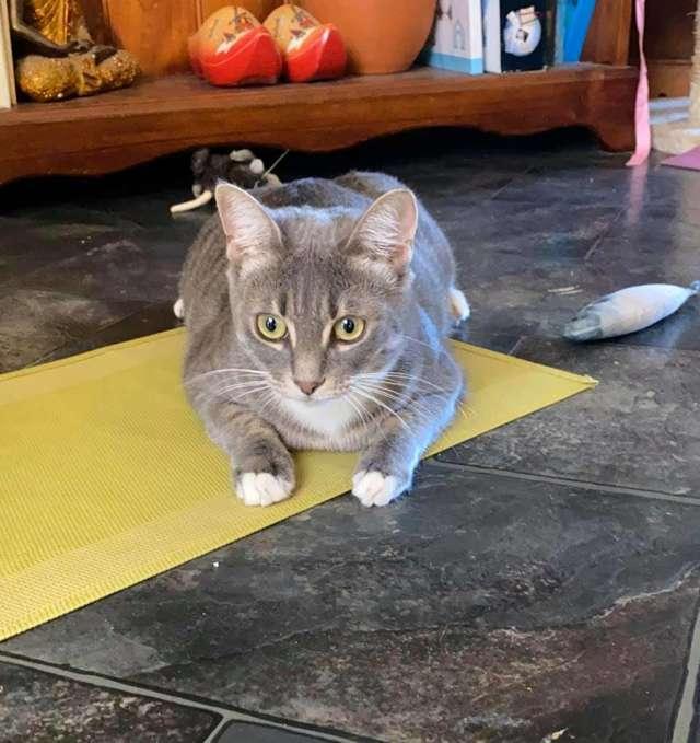 Gato destrói papel higiênico
