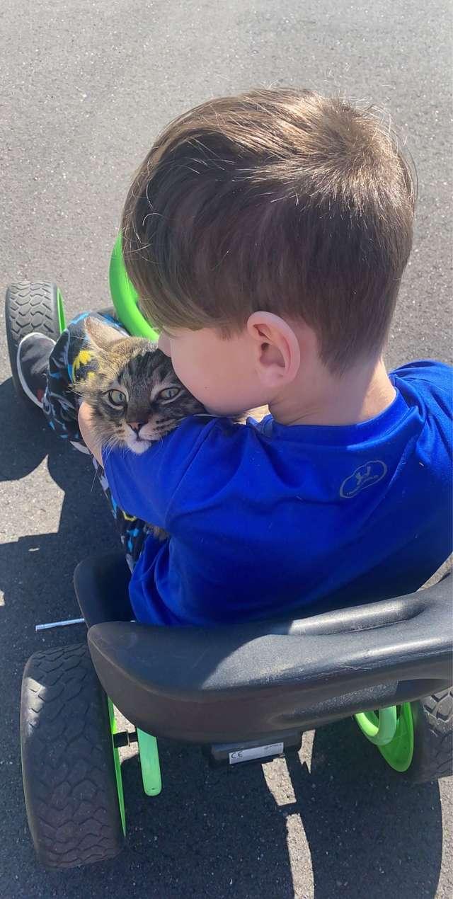 amizade entre menino e gato