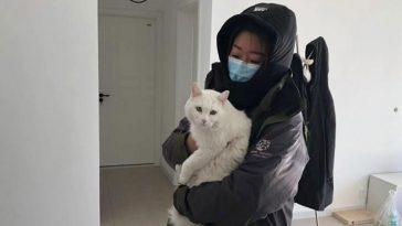 animais abandonados estão morrendo de foma na China