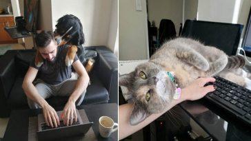 animais ajudam humanos durante home office da quarentena